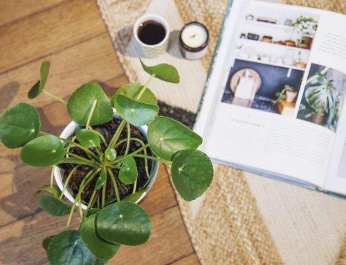 Pourquoi acheter des photos sur Adobe Stock n'est pas pour vous ?